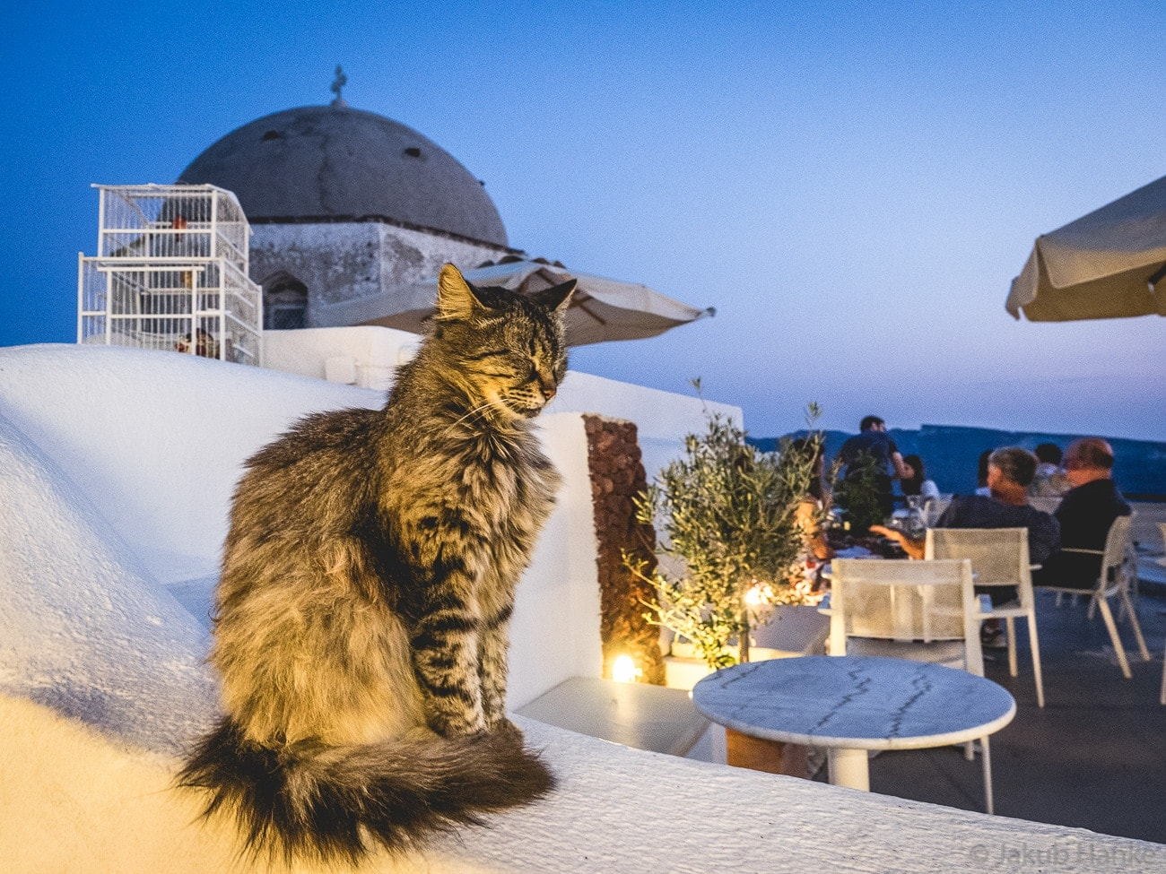 Kitty in Santorini